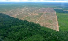 Nestlé suspends palm oil sourcing from Guatemalan company tied to corruption and ecocide