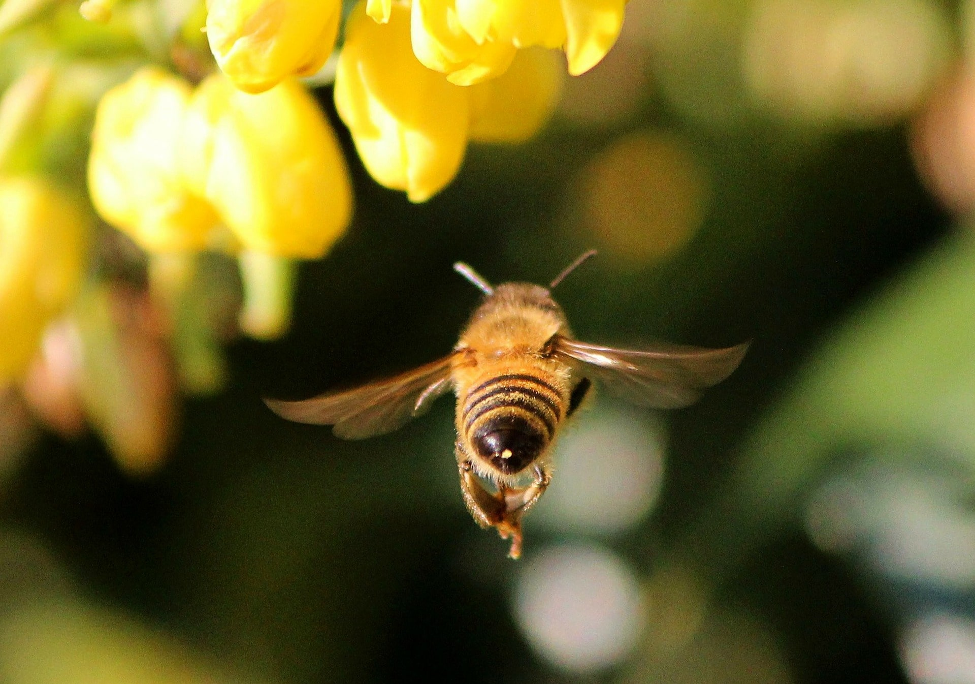 We can and must save our pollinators from extinction